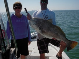 Tampa Bay Blackdrum Fishing
